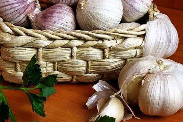 Как правильно хранить чеснок в домашних условиях, его полезные и лечебные свойства