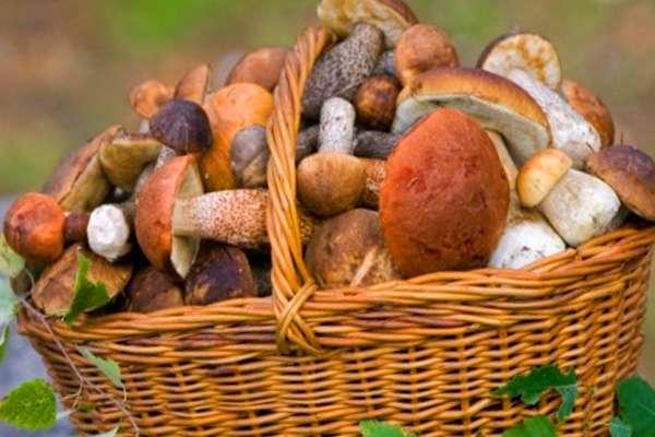Как правильно приготовить белые грибы