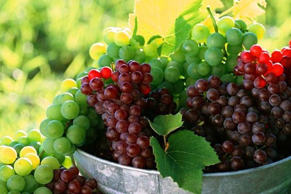 Для вина нужно выбрать нужный сорт винограда