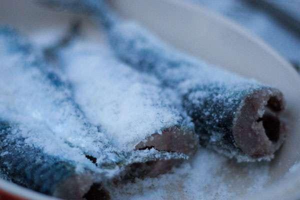 Засолка сельди и скумбрии в домашних условиях 628