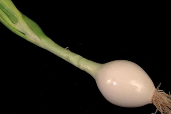 Как сделать лилию из лука