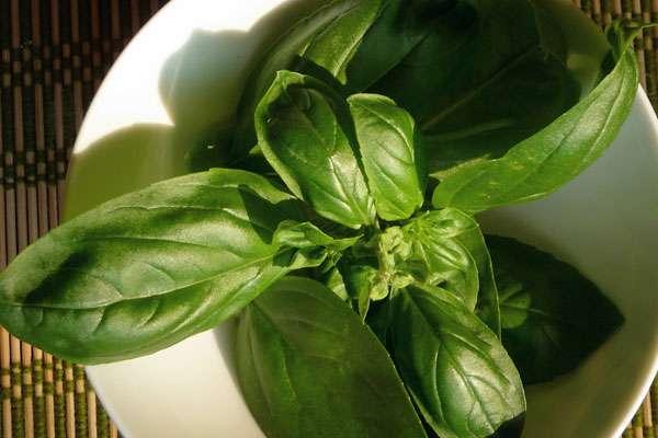 Как использовать траву базилик в кулинарии