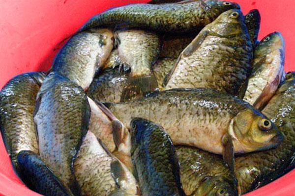 Приготовить уху в домашних условиях из речной рыбы