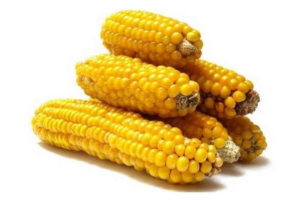 Кукуруза для диабетиков